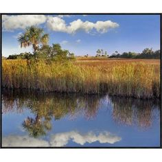 Global Gallery Cabbage Palm in Wetland, Fakahatchee State Preserve, Florida by Tim Fitzharris Framed Photographic Print on Canvas Size: