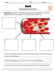 Circulatory System Reading Passage This download includes a 3 page reading passage over the circulatory system and an additional 1 page over blood. In the reading passage there are questions off to the side to check for comprehension. There is also a 1 p