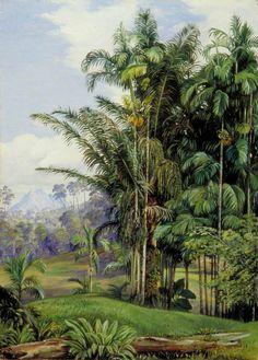 Marianne North Gallery: Painting Group of Wild Palms, Sarawak, Borneo Botanical Illustration, Botanical Prints, Illustration Art, Illustrations, Landscape Art, Landscape Paintings, Marianne North, Jungle Art, Kew Gardens