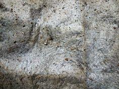 Dirt_dust_mop_texture_2.jpg (4032×3024)