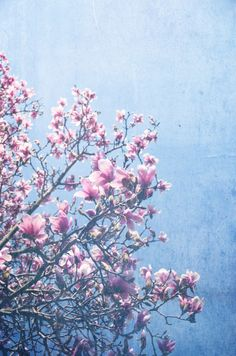 She Bloomed Everywhere She Went Art Print, good vibes, happy art, romantic, pink flowers, floral, valentine, nature decor