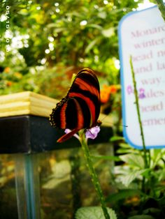 Elegant Butterfly Room At Phipps Conservatory