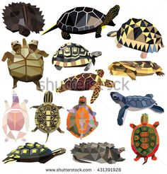Turtle Tortoise Terrapin set colorful low poly designs isolated on white…