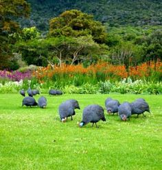Theme Trees and Flowers : Kirstenbosch Botanical Gardens. Cape Town. (25 pieces)