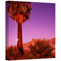 Desert Moon' by Dean Uhlinger Photographic Print Gallery-Wrapped on Canvas