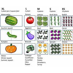 Vegetable-Plants-Per-Square-Foot agricultura, jardineras de cemento, huerto Style Baby, Bush Beans, Square Foot Gardening, Backyard Garden Design, Organic Gardening Tips, Planting Vegetables, Veggies, Vegetable Gardening, Kitchen Gardening