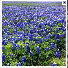 Fredricksburg, Texas.  I miss Texas.