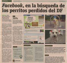 Usan redes sociales para difundir las fotos e información de mascotas extraviadas en el DF.