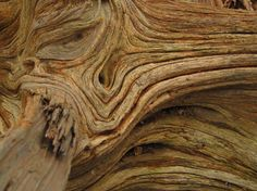 Texture Photography | Elements & Principles of Art | Pinterest | Texture, Nature and Search