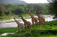 Selou game reserve, Tanzania