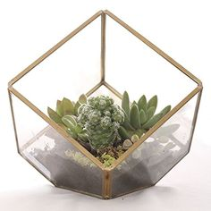 Lings Moment Glass Geometric Terrarium for DIY Garden Project Copper Vase Decoration with Succulent Plants >>> Check out the image by visiting the link.