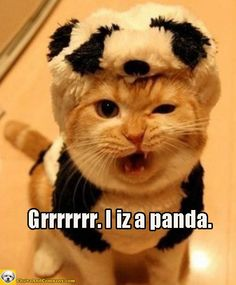 Jackie Chan and a furry friend. (Yes, they both role play as pandas. Costume Chat, Cat Costumes, Halloween Costumes, Kitty Costume, Baby Animals, Funny Animals, Cute Animals, Panda Triste, Crazy Cat Lady