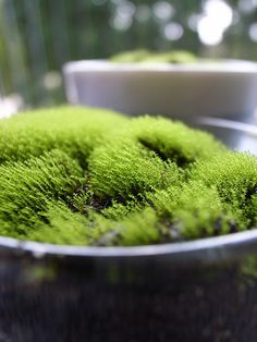 Moss! https://www.facebook.com/puffterrariums