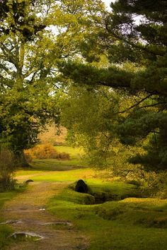 The New Forest, Hampshire, England
