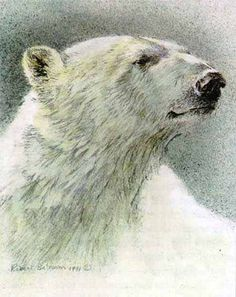 Polar Bear Portrait; Robert Bateman