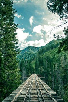 foresity:  Mountain Tracks ||Isaac Gautschi