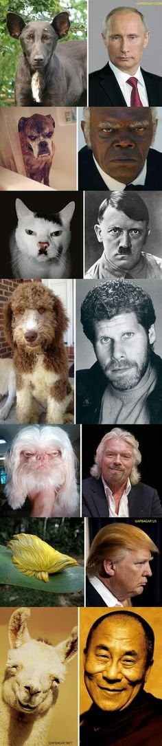 Top 8 Funniest Pictures Of Animals vs. Celebrities...