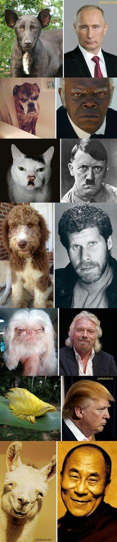 Top 8 Funniest Pictures Of Animals vs. Celebrities...