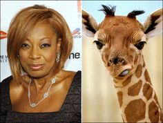 Star Jones may have shrunk to half her size, but she still looks eerily like this giraffe ...