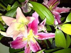 Lilies... they smell so good!