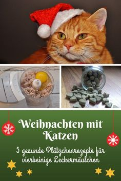 Christmas with cats - 5 cookie ideas for the kitty Cat Noises, Cats And Cucumbers, Cat Whisperer, F2 Savannah Cat, Wild Ones, Litter Box, Crazy Cat Lady, Cat Breeds, Animals And Pets