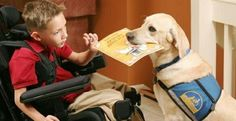 Service dogs are a type of assistance dog that help their owner with walking, dressing, household chores, and retrieving and carrying items.