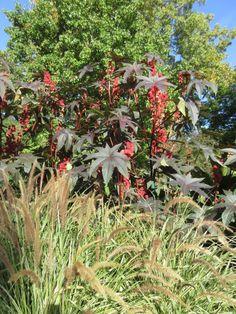 Autumn Descends - Rotary Botanical Gardens