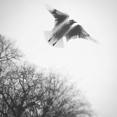 Escape ~ Monochrome, Around The Worlds, Bird, Photo And Video, Black And White, Photography, Animals, Instagram, Photograph