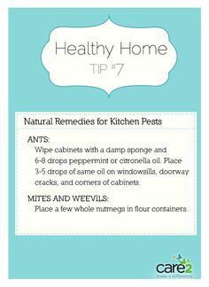 Natural remedies for kitchen pets - More remedies on the page
