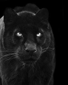 black power   #follow www.pinterest.com/armaann1  