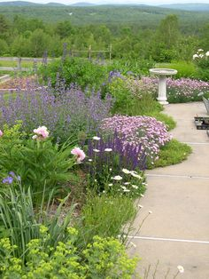 This shot shows the flowers (from foreground:  ladies mantle, wild daisies, unknown pink peony, Salvia May Night, Nepeta Walkers Low,  cheddar pinks, baptisia, and cranesbill geranium) next to the cement walkway (used for seedlings this time of the year), with the vegetable area behind (the structure is for pole beans)