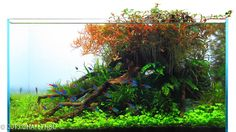2013 AGA Aquascaping Contest - Entry #408