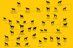 Looking for stats on dog breeds of the most popular dogs? Wonder if different dog breeds have more health issues? Well this dog breed report card brea Different Dogs, Dog Gifts, Dog Breeds, Cute Dogs, Infographic, Infographics, Dog Presents, Funny Dogs, Horse Breeds
