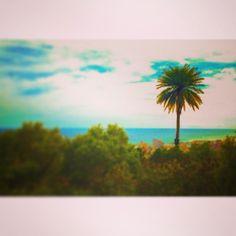 The lone palm tree. #scenery #hawaii #hilife #808 #luckywelivehi #summer #nature #instagood #instamood  (at Mt. Tantalus/Puu Ualakaa State P...