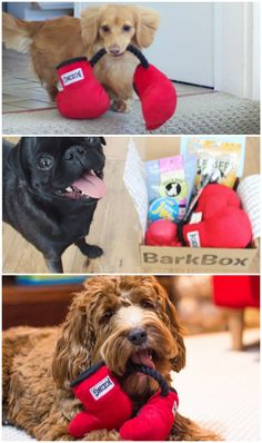 April's BarkBox was a knockout! Don't fur-get to fetch your subscription by 5/15 so you don't miss out on this month's pawsomeness.