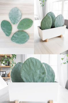 How to Propagate Prickly Pear Cactus Pads // Propagating Cactus Here are my tips for propagating prickly pear cactus pads to make new plants. Prickly pear cactus is a classic, grows quickly, and is easy to care for! Cacti And Succulents, Cactus Plants, Cacti Garden, Succulent Planters, Hanging Planters, Cactus Decor, Home Design, Propagating Cactus, Propagate Succulents