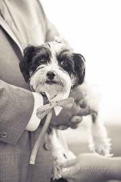 pup ring bearer, adorable!  Wedding & Portrait Photographer in San Luis Obispo :: Allyson Magda Photography - ... - coco + todd, charming pt 16, big sur wedding