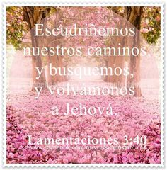 Lamentaciones 3:40
