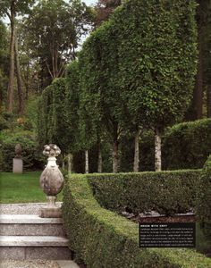 Clipped Hornbeam trees - Perfectly trimmed for privacy. Love the Boxwood hedge.