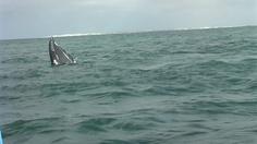 Watching Grey Whales in Laguna Ojo de Liebre (Scammon's Lagoon), Guerrero Negro, Baja California Sur, Mexico. http://bajabybus.com/blog/item/8-warning-whale-watching-works-wonders https://plus.google.com/b/100731970246750381834/photos/100731970246750381834/albums/5715494394253441041