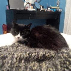 Found Cat - Unknown - Kitchener, ON, Canada N2E 1G5 on November 16, 2014 (13:00 PM)