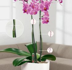 Fresco, Pots, Growing Orchids, Self Watering Planter, Orchid Care, Plant Growth, Glass Vase, Planters, Flowers