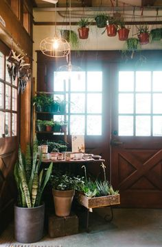 Snake plant, rhipsalis, aloe and ceramics in our mercantile. Image by @aipxwhole30