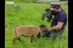 You ganna learn today #goat #camera #cameraman Cute Funny Animals, Cute Baby Animals, Cute Cats, Cute Animal Pictures, Cool Pictures, Funny Pictures, Spring Pictures, Camera Shy, Funny Love