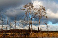 Prairie dans la forêt de Sénart - [Forêt de Sénart, Seine et Marne / Essonne]
