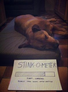 208 Best Dog Shaming Images Funny Animals Funny Dogs Dog Cat