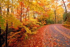 There is nothing better than a gorgeous fall drive.   :)