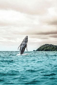 Isla Gorgona, in the Colombian Pacific, is a great place to go whale-watching