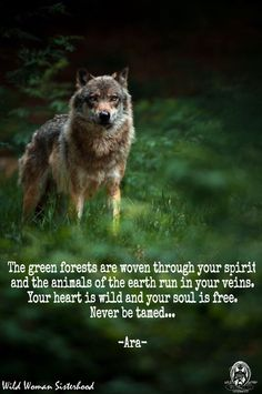 The green forests are woven through your spirit and the animals of the earth run in your veins. Your heart is wild and your soul is free. Never be tamed. WILD WOMAN SISTERHOOD