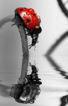 Una coccinella che si specchia e vede nel riflesso c solo se stessa e tu manchi, nelle gocce di pioggia che mi bagnano, nella coccinella, nel colore...